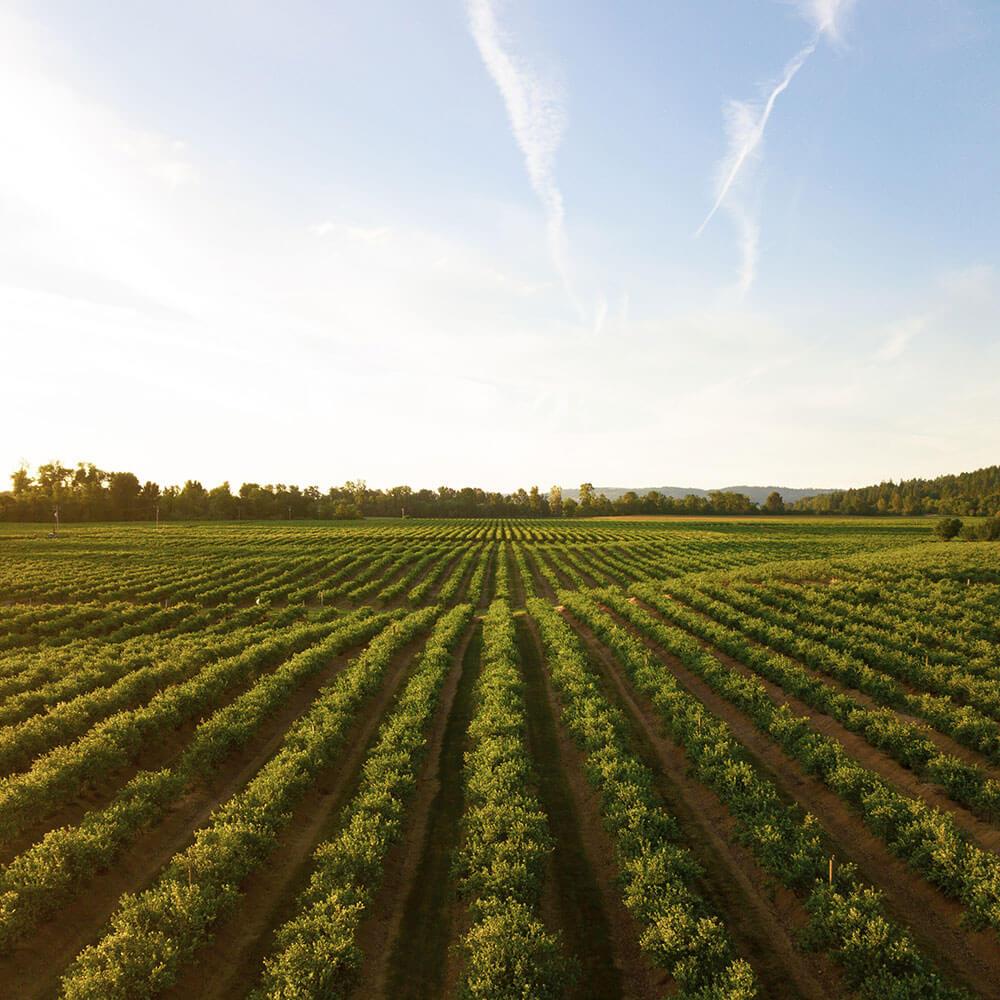 agriculture-unsplash